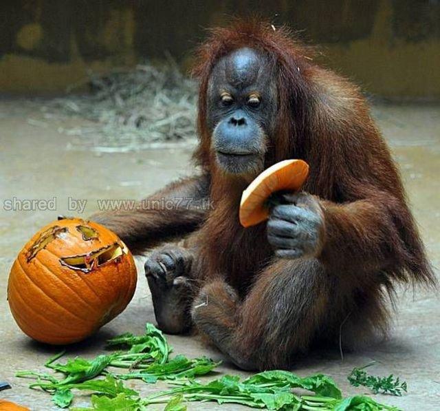 http://1.bp.blogspot.com/_EHi0bg7zYcQ/TLal4uq6f6I/AAAAAAAANIM/mP4LYo44JOg/s1600/these_funny_animals_515_640_22.jpg
