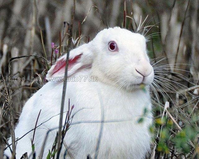 http://1.bp.blogspot.com/_EHi0bg7zYcQ/TLanlIzI26I/AAAAAAAANIs/9dC_dhJBXzY/s1600/these_funny_animals_515_640_26.jpg
