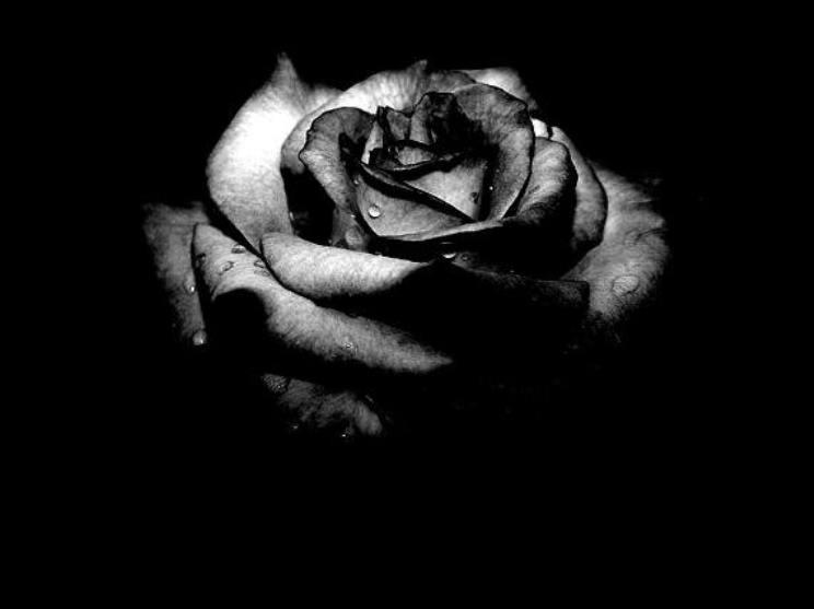 http://1.bp.blogspot.com/_EJX8WEauPYc/R03684U-u1I/AAAAAAAAADA/melsDUkw0TQ/s1600/black_rose3.jpg