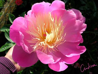 http://1.bp.blogspot.com/_EKAq6FwUmQo/ShBymqHQzKI/AAAAAAAAAuc/uiX2EajGPgE/s400/Bowl+of+Beauty.jpg