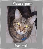 please purr for me