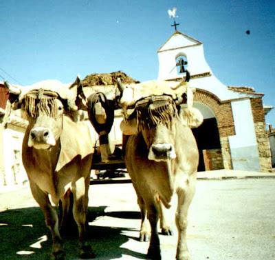 Avantales mataperros - Cuadros de vacas ...