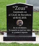Nunca olvidaremos, vuestras muertes no serán en vano ni quedarán impunes.