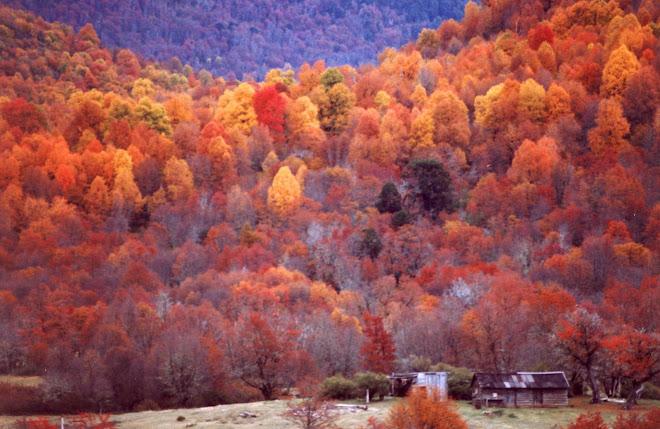 Aluminé en otoño