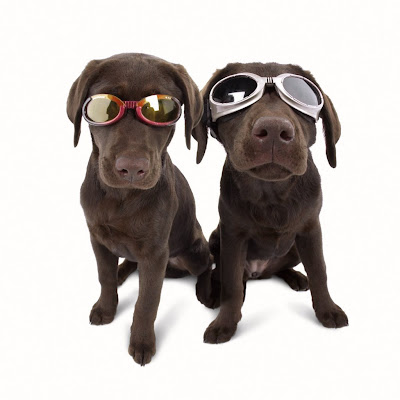 Dogs wearing Doggles sunglasses