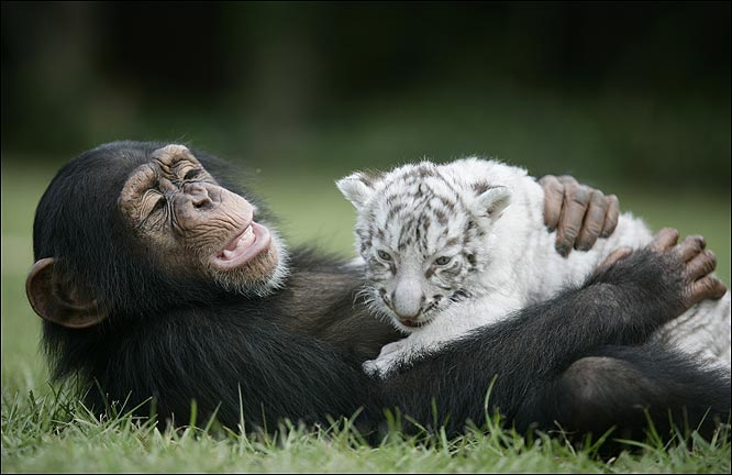 dyr i verden jaguar