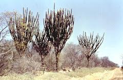 A paisagem típica do sertão