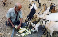 Alimentando os animais com coroa-de-frade