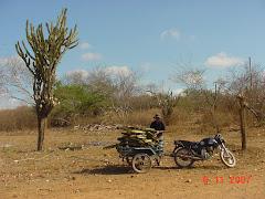 Corte e transporte de mandacaru em moto