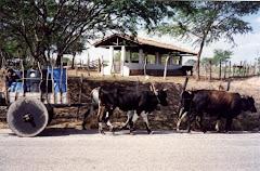 Transporte de água em carro de boi