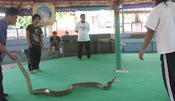 Thai Snake Farm