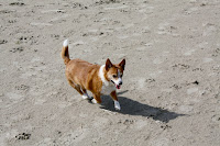 Foofur on the beach