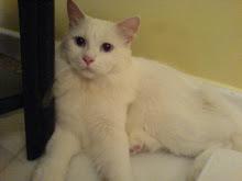 gambar kucing2 ku..