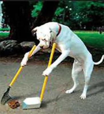 news lol tv funny dog poop signs