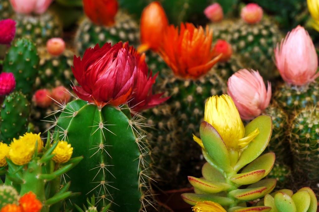 Abanico de colores p gina 3 for Abanico de colores