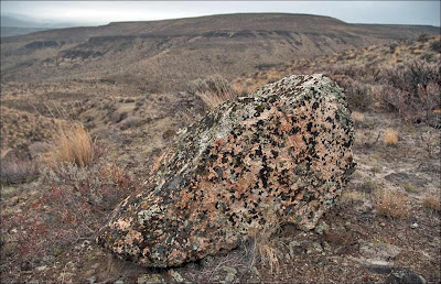 Ice Age Floods erratic boulder lichen covered