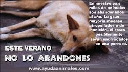 El abandono de animales (imágenes + información)
