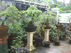 Bonsai-Jegeg garden