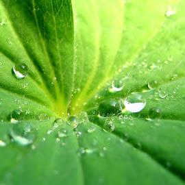 Gambar daun natural
