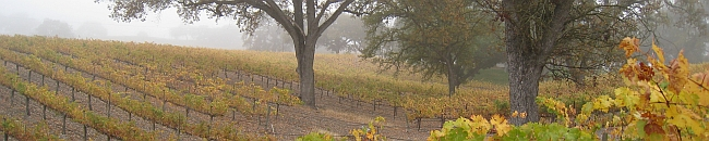 Edward Sellers Wines