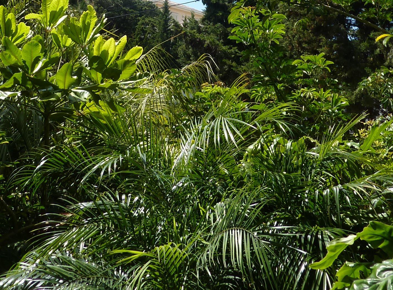 plantas jardins tropicais : plantas jardins tropicais:visita inesperada de uma Aratinga acudicaudata sublinhou a atmosfera