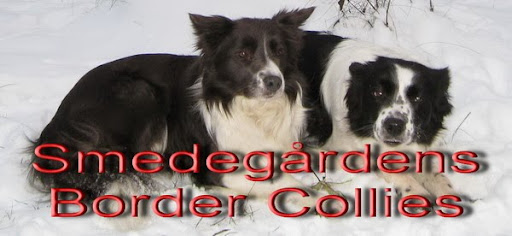 Smedegårdens Border Collies