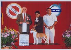 Cuarto Grupo Joven CIB 2009