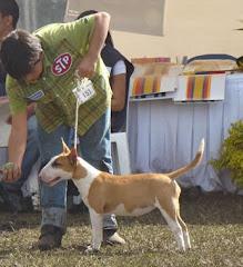 Ita hace Raza Puppies Tres dias seguidos en Medellin