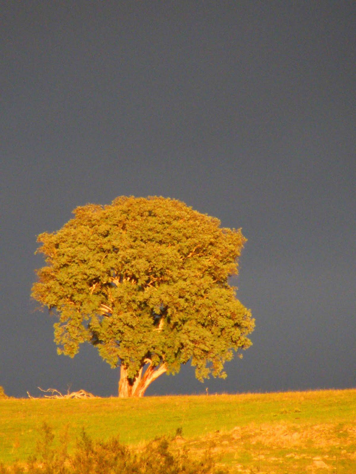 Tajanstvenim stazama duse... - Page 3 Stormy+sunrise+1