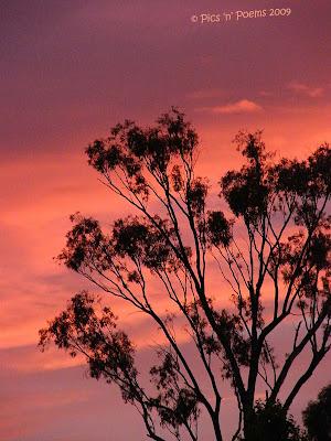 Tajanstvenim stazama duse... Sunset+tree