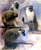 Chinese Astrology: The MONKEY
