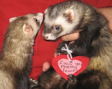 ♥ Valentine Ferrets ♥