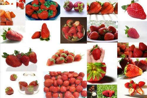 Fotografías de fresas listas para comer (27 imágenes)