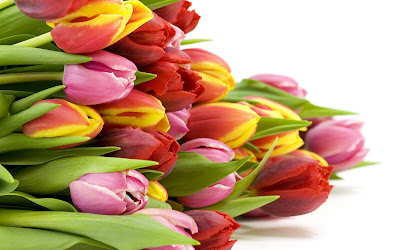 Tulipanes de colores para el Da de las Madres