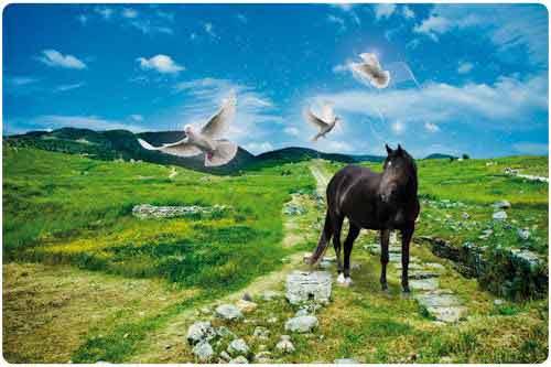 30 increíbles fotomanipulaciones en animales