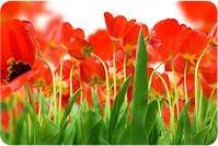 Imágenes de tulipanes para el 10 de mayo (33 fotos)
