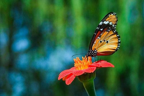 Mirando muy de cerca los insectos de mi jardín (24 fotos)