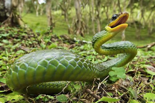 La serpiente verde (The green snake)