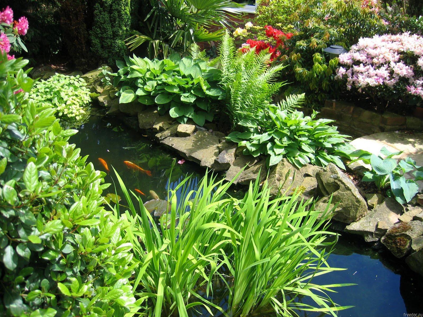 Какие цветы посадить возле пруда фото