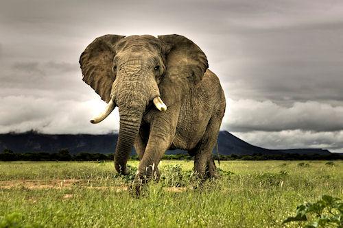 6 Imágenes de África del Sur o South Africa