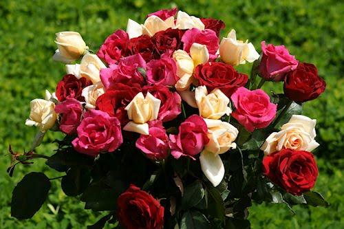 Rosas de colores parte I (12 fotografías gratis)