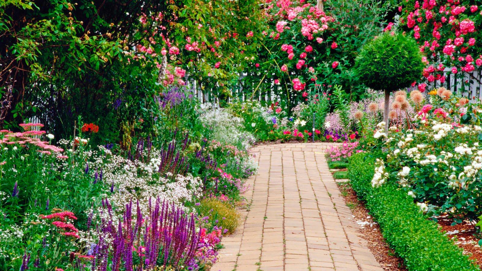 flores jardins fotos : flores jardins fotos:Summer Garden