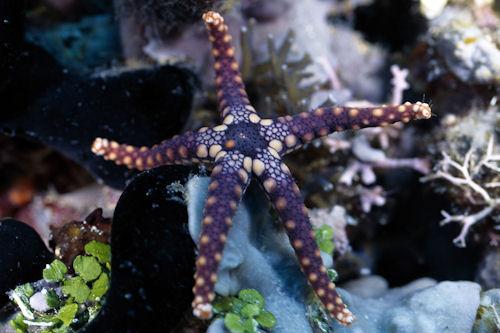 Peces en el mar I (4 fotos preciosas del fondo marino)