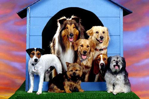 Fotografías de perros I (10 caninos muy tiernos en HR)