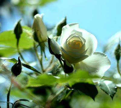 Fotografías e imágenes de flores