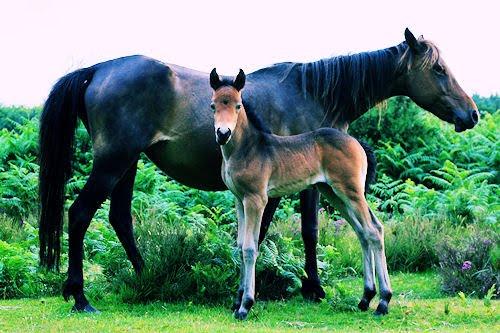 Fotografías de caballos II (Equinos de Pura Sangre)
