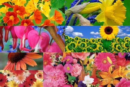 Flores del campo VI (7 beautiful colors flowers)