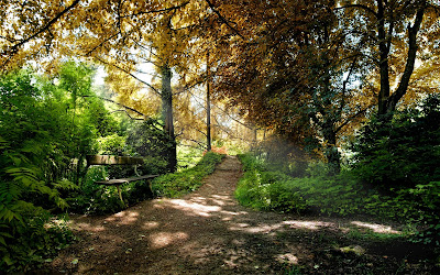 Paisajes Naturales - Nature Landscapes - the-bench-from-the-forest