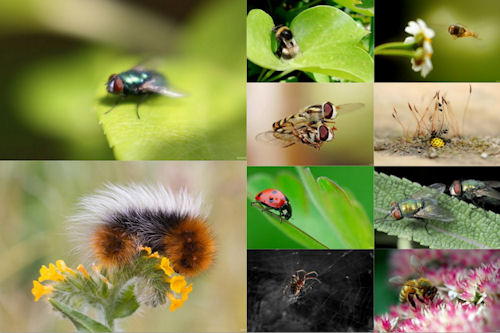 Los insectos de mi jardn VI (10 imgenes de uso libre)