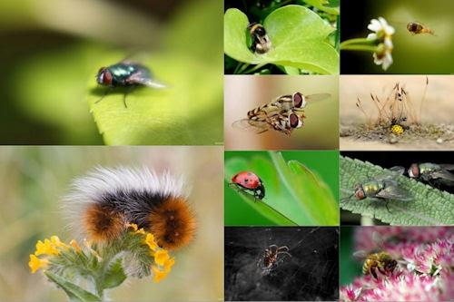 Banco de im genes los insectos de mi jard n vi 10 for Insectos del jardin
